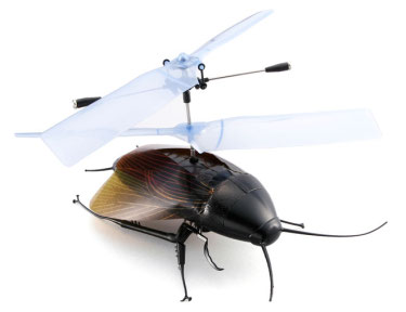 Flying Cockroach
